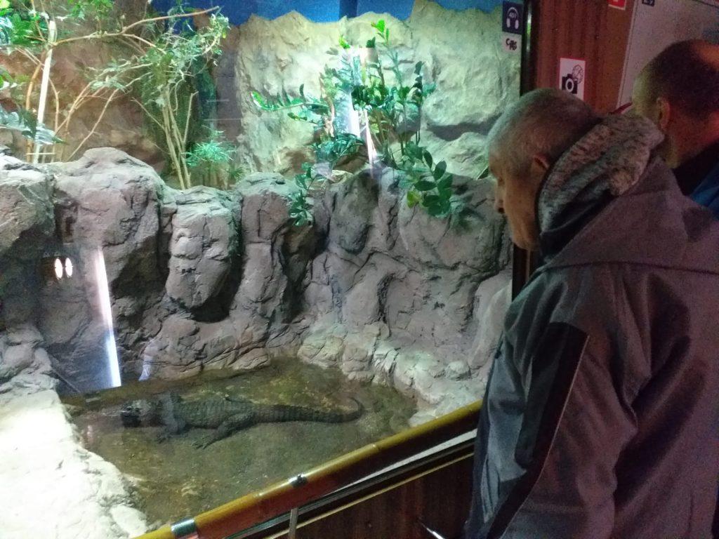 Podopieczny oglądający jasczurkę w akwarium.