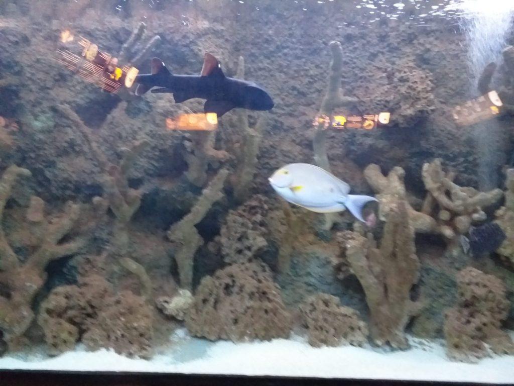 Zdjęcie przedstawia kolorowe ryby na tle rafy będącej w akwarium.