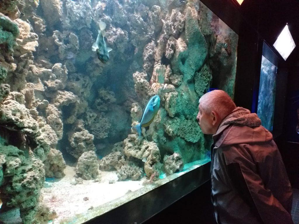 Pochylony mieszkaniec wpatrujący się w rafę koralową oraz dwie duże kolorowe ryby.