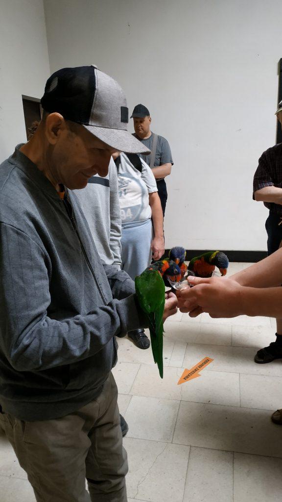 Mieszkaniec trzyma na ręce papugi, które są w trakcie karmienia z małego pojemniczka. Pojemnik trzyma inna osoba.
