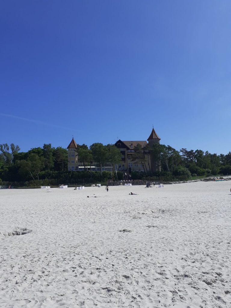 Bezchmurne niebo oraz piaszczysta plaża w tle drzewa